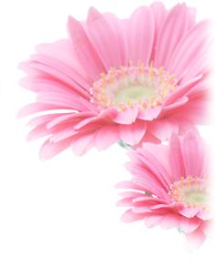 西東京市乳がん検診